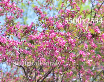 Flower photo, Flowering Trees, Flower Photography,  instagram photo, spring photo, stock photo, digital photo, pink photo
