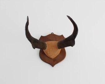 Vintage Mounted Deer Antlers / Taxidermy / Oddities / Wall Decor / Rustic / Cabin