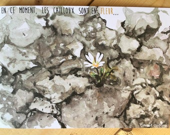 "POSTCARD ""stones are in bloom"""