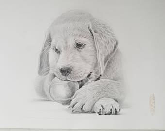 Pet drawing