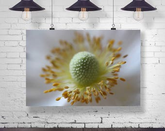 Sensuality blossom flower Macro Blossom photography Photography botanical nature natural poster, from 45 x 30 cm