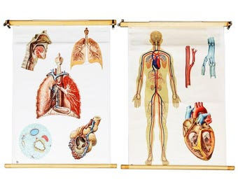 "Vintage School Teaching Chart ""Circulatory and Respiratory System"""