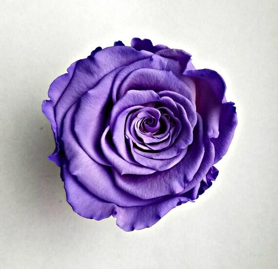 Preserved rose 6 pack, purple rose, rose, Everlasting rose, Forever rose, wedding rose, engagement rose, wholesale rose