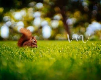 Cute Squirrel Digital Background