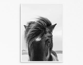 Horse head photography. Horse eyes. WIld horse. Black and white horse. Nature photography. Instant download