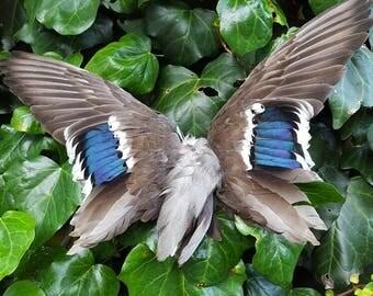 Mallard Duck wings