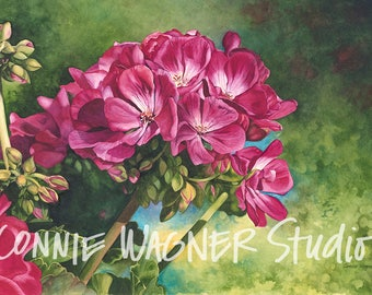 Powerful in Pink > Original watercolor painting by Connie Wagner > 24 x 17 > floral > geraniums > pinks > greens > spring > home decor