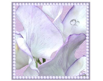 Lilac Sweet Pea