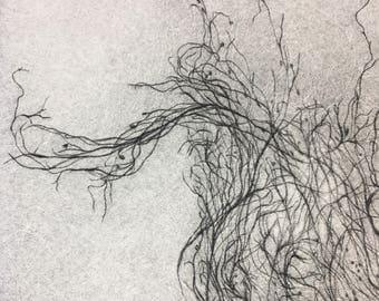 Engraving, engraving filaments, small algae Breton drypoint