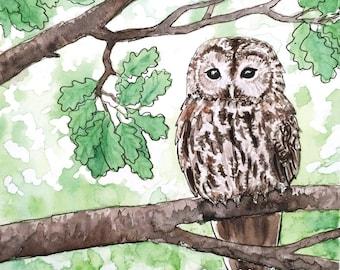 The Tawny owl postcard