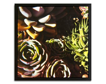 "Fine Art Photography ""Succulents"" Framed Stretched Canvas"