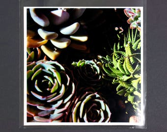 "Fine Art Photography ""Succulents"" Archival Print"
