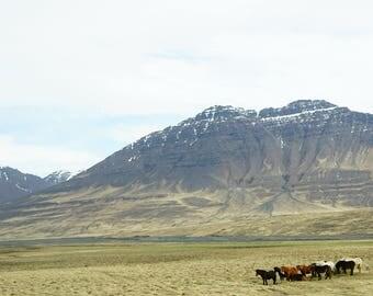 "Fine Art Iceland Landscape Photography Wall Decor 4""x6"" prints | Icelandic Horses Mountains"