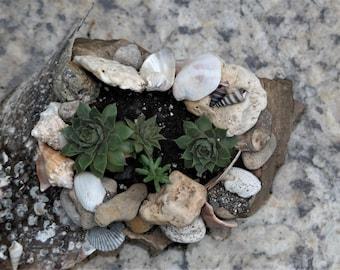 Seashell, sand and stone succulent/cactus planter