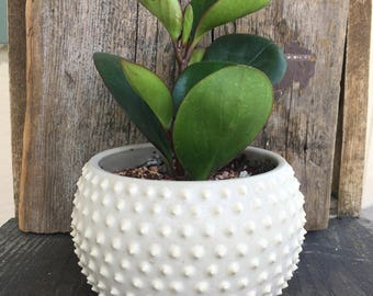 spiky planter-medium