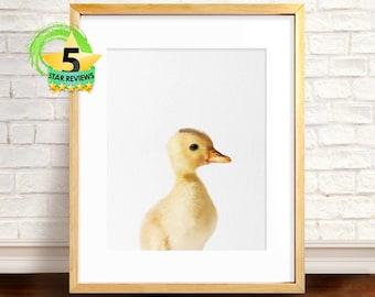 Duck Print, Children Bedroom Art, Duckling Print, Duck Photography, Peekaboo Animal, Baby Animal Poster, Baby Duck Photo, Baby Duckling Art