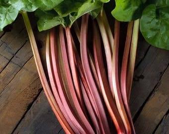 Rhubarb 'Champagne' Seeds / Rheum rhabarbarum/ Hard to Find British Heirloom (Limited Supply)