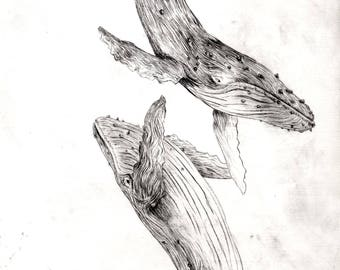 Diving Humpback Whales - original drypoint etch print
