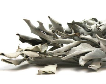 White Sage dried leaves or powdered