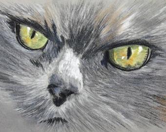A grey cat eye