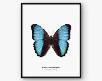 Butterfly Print, Butterfly Poster, Butterfly Wall Art, Butterfly Printable Art, Butterfly Decor, Nature Print, Scandinavian Print