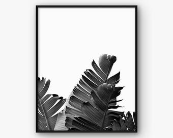 Black and White Palm Leaf Printable, Palm Leaf Photo, Banana Leaf Printable, Banana Leaf Photo, Tropical Photo, Intant Download, Plant Photo