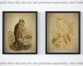 Set of 2 prints, Print set, Birds print set, Dictionary art, Birds printable, Vintage prints, 8x10 artwork, Falcon art, JPG, 11x14 wall art