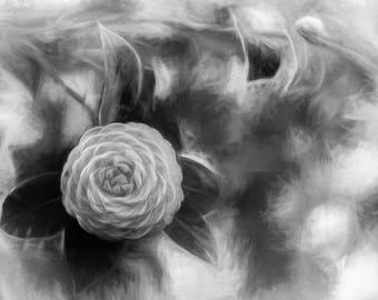 "Camellia Print, Camellia Art Photo, Camellia Canvas Wrap, Savannah, Georgia, Black & White,  ""Camellia Monochrome Art"""
