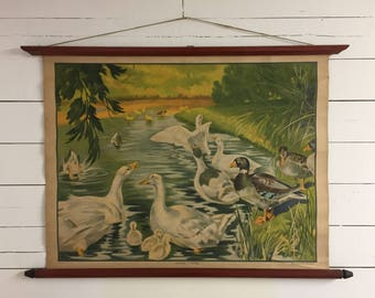 Educational Poster geese and ducks vintage 1930s
