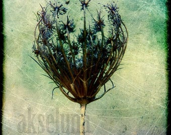 Fine art photography print * autumn * 15cm x 15cm