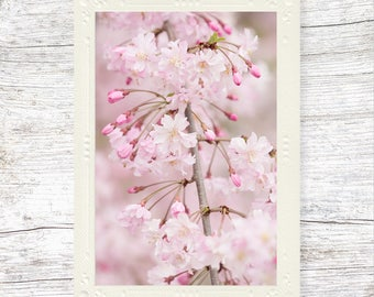 Card with Flowers, Cherry Blossoms, Flower Photo, Floral Art, Nature Photography