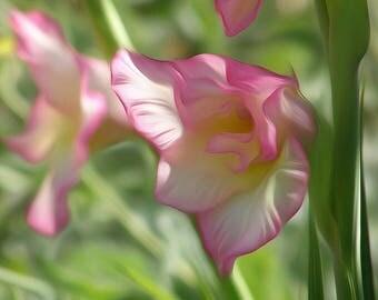 Pink Gladiolus - Digitally Enhanced 8x10 Photo Print