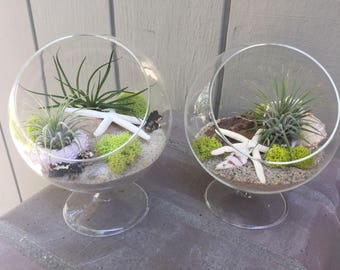 Glass pedestal Terrarium with Air Plant, KIT to make terrarium, DIY kit to make your own terrarium, air plants, terrarium