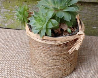 Succulents in a food can planter decorated with ropes /upcycled planter/ rustic planter/eco friendly/ recycle lovers/succulents lovers
