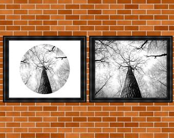 Printable Circle Art, Tree Print, Black and White Photo Print, BW Photography, Nature Print, Minimalist Wall Art, Home Decor