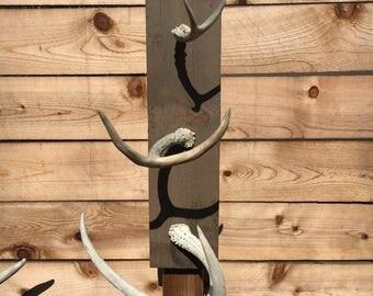 Rustic Antler wall Hanger