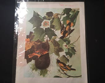 Bird print from vintage book