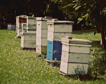 """Photography honey bee hive photograph teal green summer farm country wall art """"Honey Bee Hive"""""""