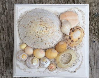 Medium Gold and White Limpet Shell Sea Treasure Box