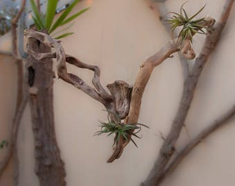 FOR YOUR TILLANDSIAS FLEETS WOODEN STAND