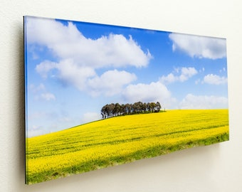 Trees on hill overlooking canola crop  - 150x64cm Acrylic Photography Print