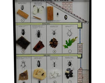 a great vintage school teaching display of household pests (2)