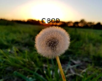 What A Dandy Dandelion Jpg Image Photo Commercial Use DIGITAL DOWNLOAD ONLY