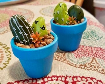 cactus rock garden