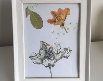 Goldfee Rhododendron pen illustration and pressed flower print