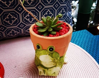 Succulent in terracotta pot with frog