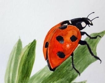 Original Watercolour Painting of Ladybird