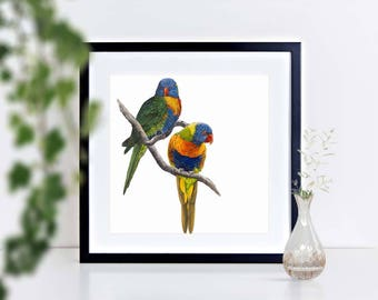 A unique  gift of a Limited edition signed print of a Rainbow Lorikeets, framed or mounted for that special place in your home