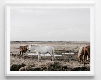 Horse Print, Horse Photo, Horse Art, Horse Poster, Horse Wall Art, Horse Digital Print, Horses, Scandinavian Art, Horse Printable