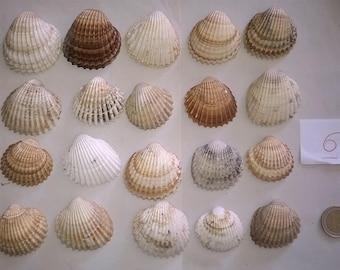 6 c) ocean shells, grass, clam shell